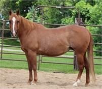 Soula Jule Star Daughter in foal to Fletch That Cat