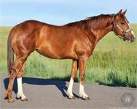 2018 filly RAP ONE TIME by Rap Cat x One Time Ritz