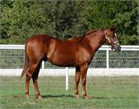 3 yr old gelding by Smooth As A Cat