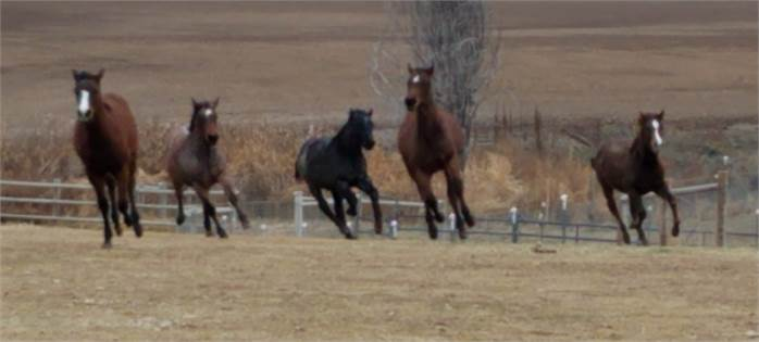 REDTAIL RANCH PERFORMANCE HORSES REDTAIL RANCH PERFORMANCE HORSES
