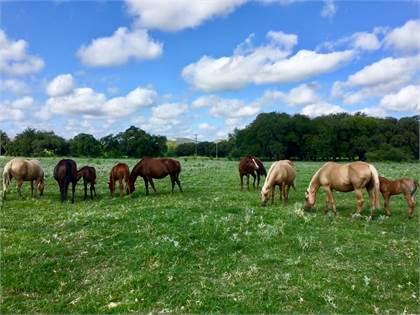 Stoner Ranch Quarter Horses Tom Stoner